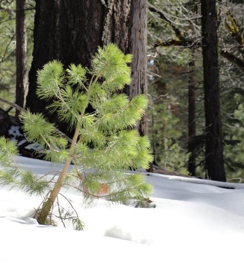 Life pops out - Yosemite April 2012