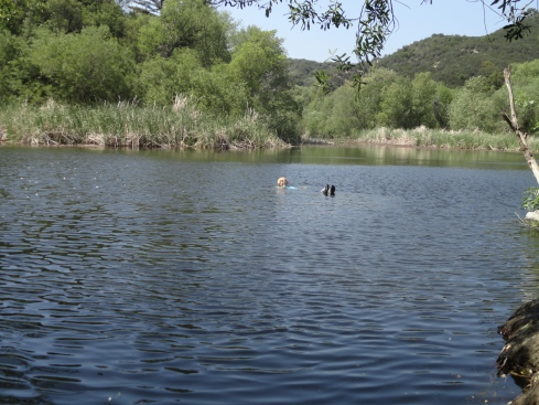Melanie Renfrew swimming, Century Lake MCSP, Earth Day field trip 2012