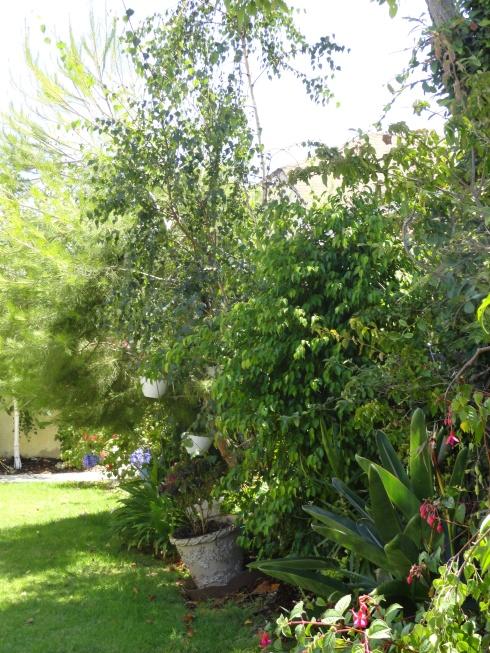 July 10, 2012 backyard