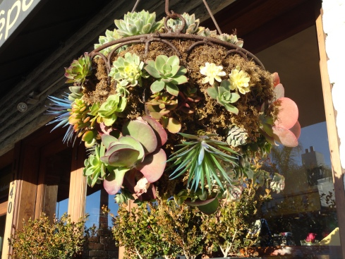 Succulent hanging basket Manhattan Beach, 12-13-12