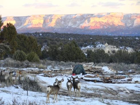 Admiring the view, mule deer in Utah, Dr. M. Renfrew, Jan. 2013