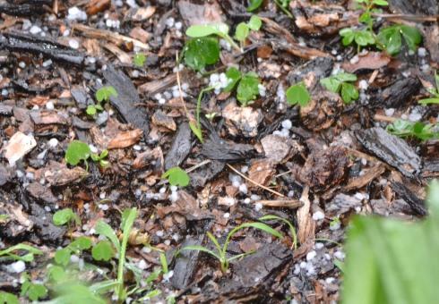 Hail in L.A. 2-8-13 M.P. Renfrew 940 a.m.