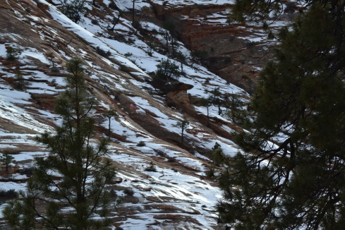 Snow stays on North-facing slope, Zion, Utah 2-2-13 MP Renfrew