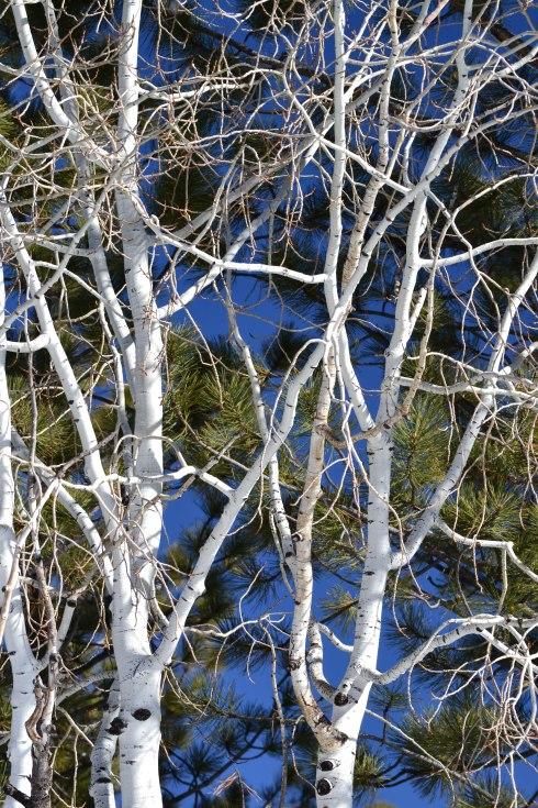 The Web - aspen branches