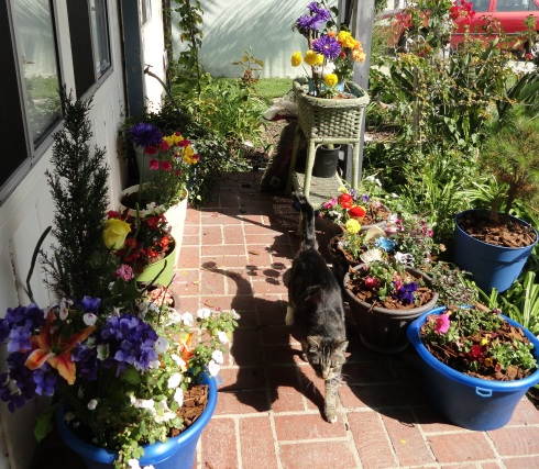 Oscar & new flower arrangements, 4-3-13
