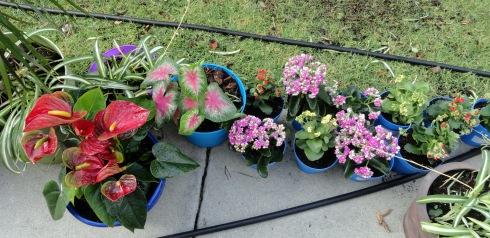 I made 30+ more plant pots - 2, 8-17-13, MP Renfrew