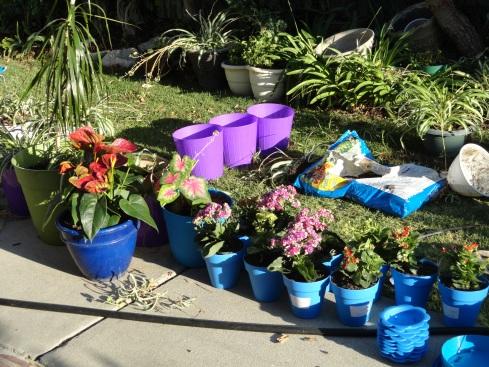 I made 30+ more plant pots, 8-17-13, MP Renfrew