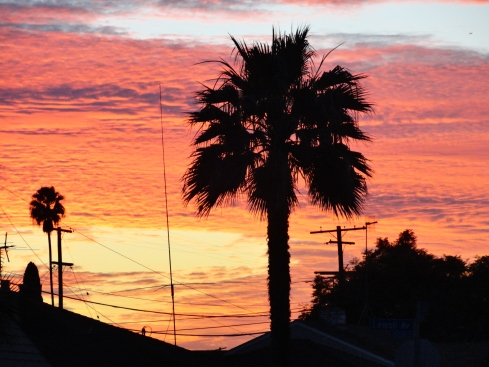 1-19-14 Sunset Gardena, Melanie Renfrew photo 2