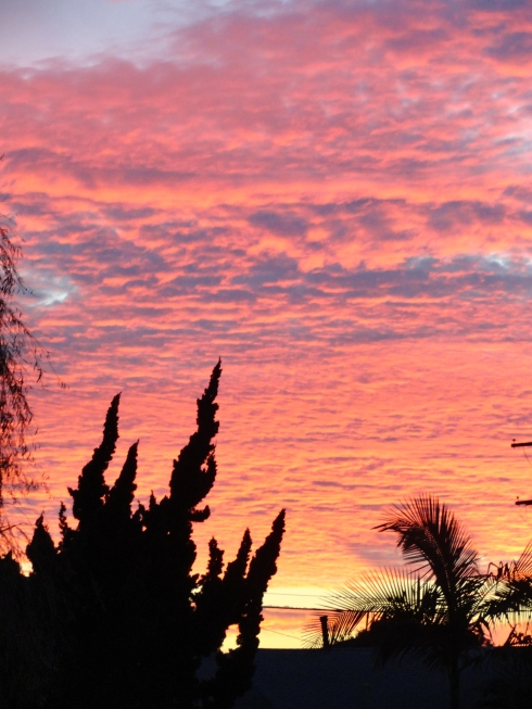 1-19-14 Sunset Gardena, Melanie Renfrew photo