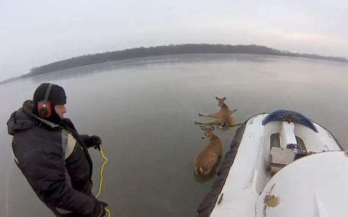 Deer_Frozen_Hovercraft