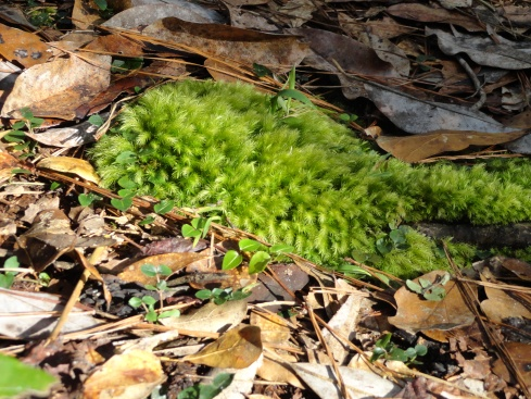 New growth 2 in De Leon Springs State Park, MP Renfrew