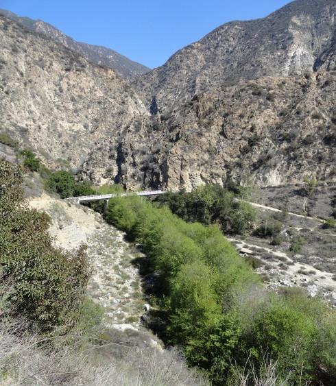 Ribbon of willows, alders Eaton Canyon stream at bridge, 3-14-14, MP Renfrew