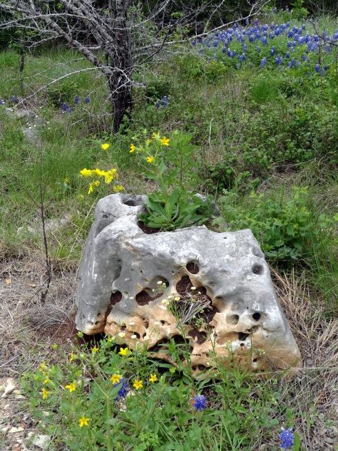 Hole-y limestone near Austin, TX, MP Renfrew