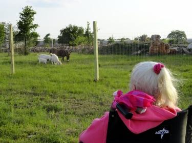 Mom watching goats, burro April 2014, G.L.