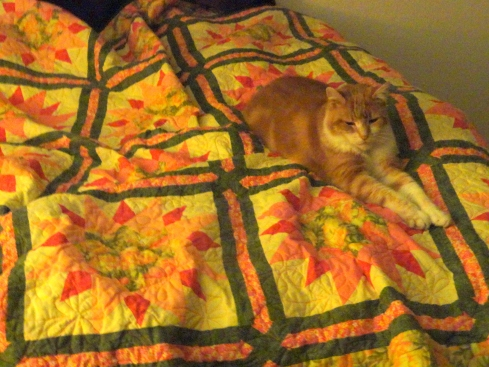 Buster colonizing quilt, 10-14