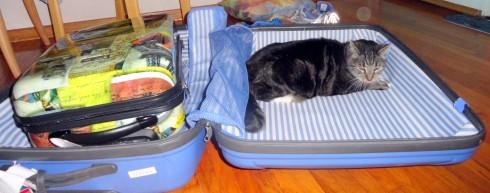 Oscar colonizing suitcase 10-14
