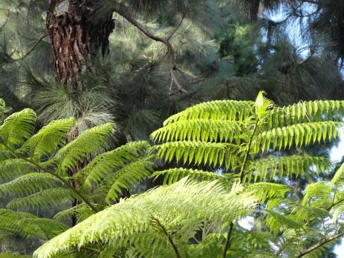 Plant responses to rain 1, 12-15-14, MP Renfrew