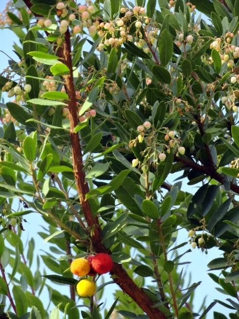 Seeds, fruit response to rain, 12-15-14, MP Renfrew