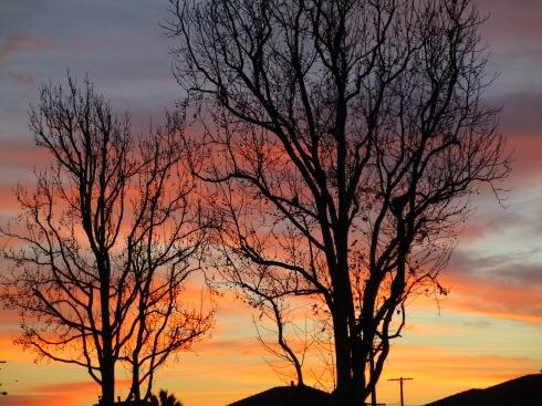 Dendritic 1 sunset, MP Renfrew 1-18-15
