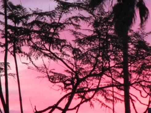 Pink silhouettes, MP Renfrew Feb. 2015