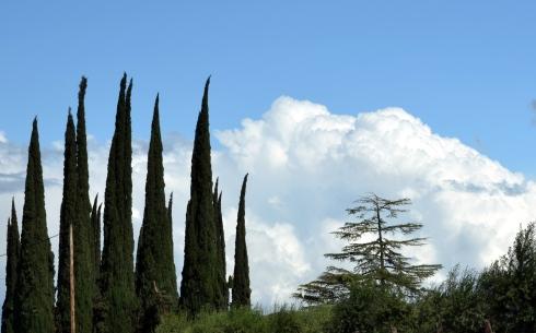 Italian cypress, cumulus congestus near Fresno 4-7-15, MMP Renfrew