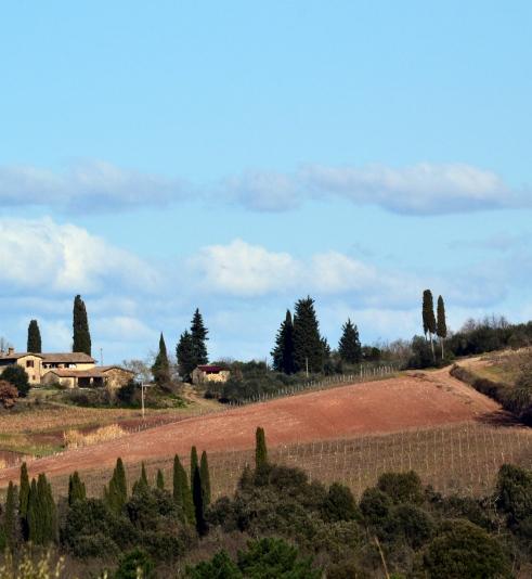 Monteriggioni landscape, cypress Jan. 2015 MMP Renfrew