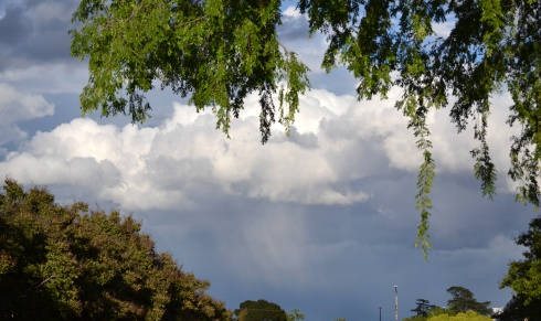 Rain in Clovis, CA 4-7-5 MMP Renfrew