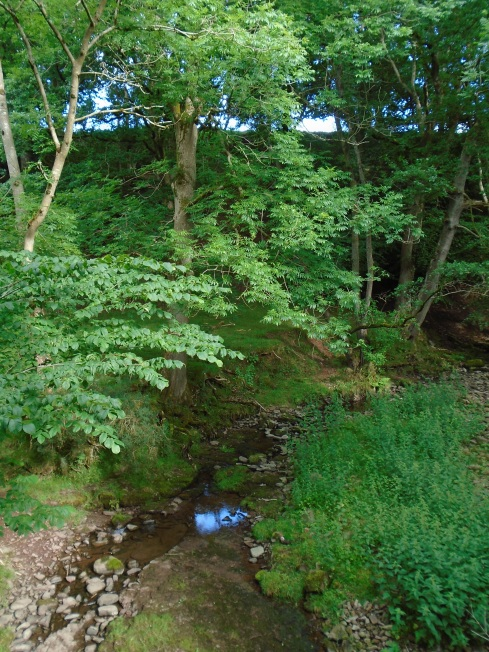 Afon Cynrig, tributary to RIver Usk near Brecon, Wales, MP Renfrew