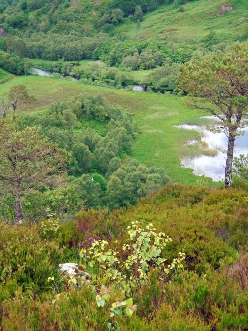 Callop River 2, Glenfinnan, MP Renfrew