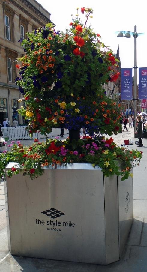 GLasgow flowers, 7-11-15 MPR