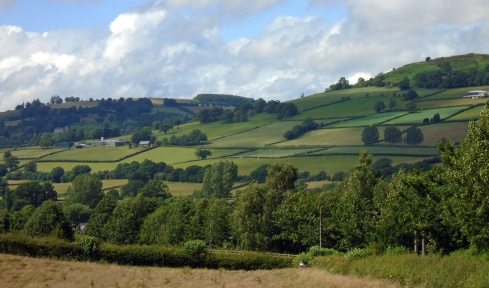 Brecon hedged fields 2, MP Renfrew
