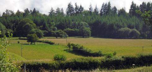 Brecon hedged fields, MP Renfrew