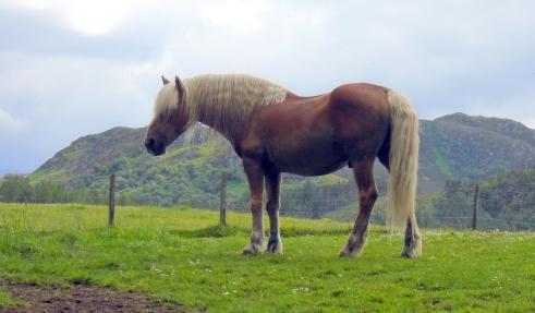 Horse at Glentruim, MPRenfrew