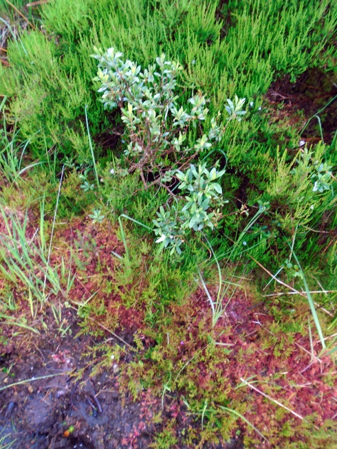 Pathside color, Loch view trail , MP Renfrew