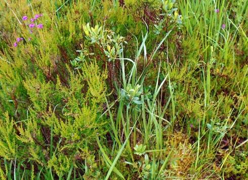 Pathside greens, Loch view trail , MP Renfrew