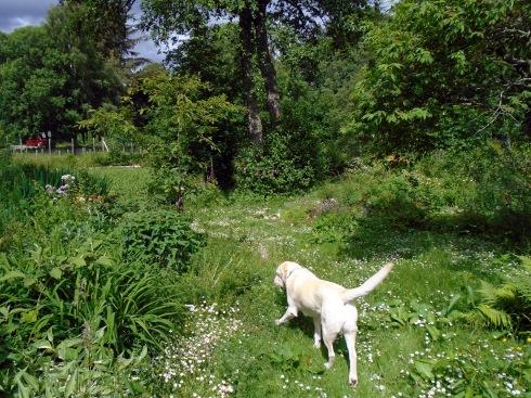 Poppy, Jo Cumming's garden, Glentruim