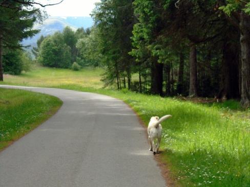 Poppy on way to Ardverikie lake, Ian Hall's dog