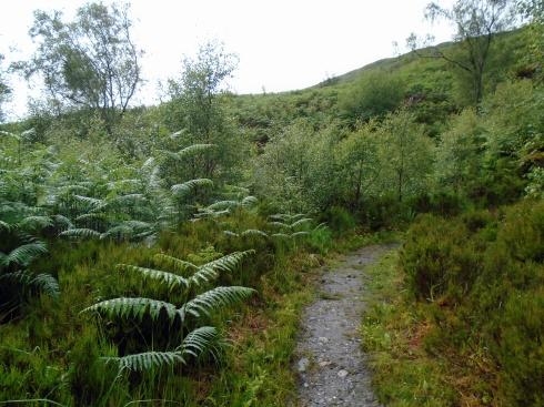 Steep hill Loch view trail , MP Renfrew