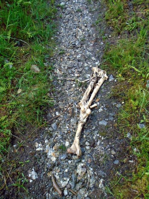 thigh bone, Loch view trail , MP Renfrew