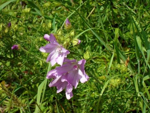 Unknown flower, Brecon, MPR