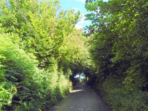 Walking up Brecon hill, MP Renfrew, canopy 1
