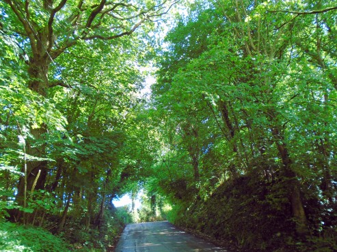 Walking up Brecon hill, MP Renfrew, canopy 2