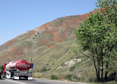 Poppies by Grapevine I5, 'coffee' tanker, 4-5-16, MP Renfrew