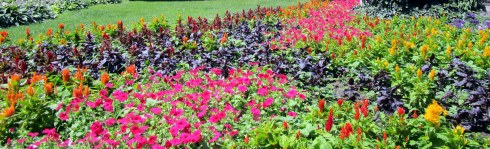 Budapest garden, MP Renfrew 6-16