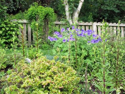 Inverness garden 3, MP Renfrew 6-16