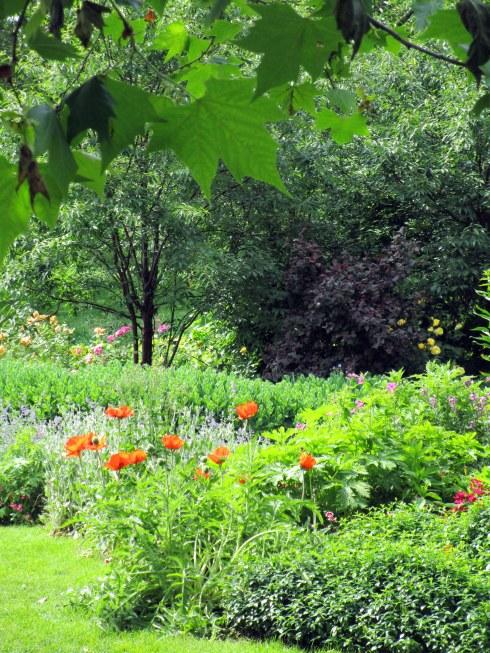 June blooms London, MP Renfrew