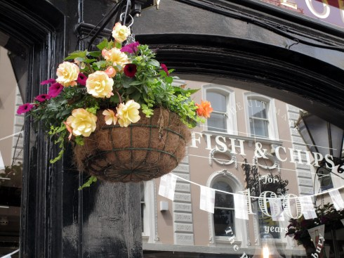 Plough hanging basket, pub London, MP Renfrew photo