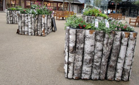 White birch planters, Scotland MP Renfrew 6-16