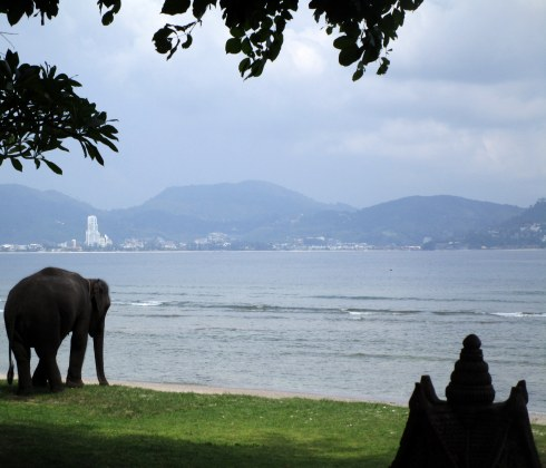 Thavorn beach elephant, Kamala Phuket, MP Renfrew 7-16