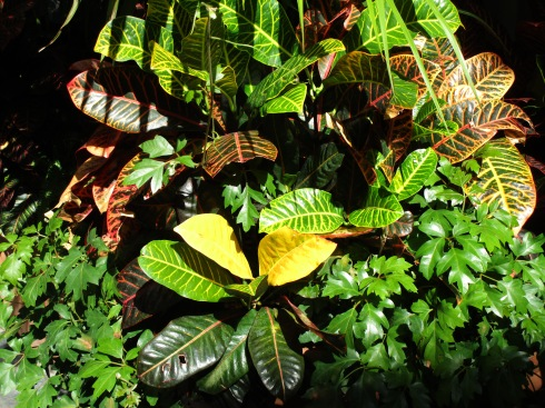 tropical-foliage-9-23-16-o-c-mp-renfrew